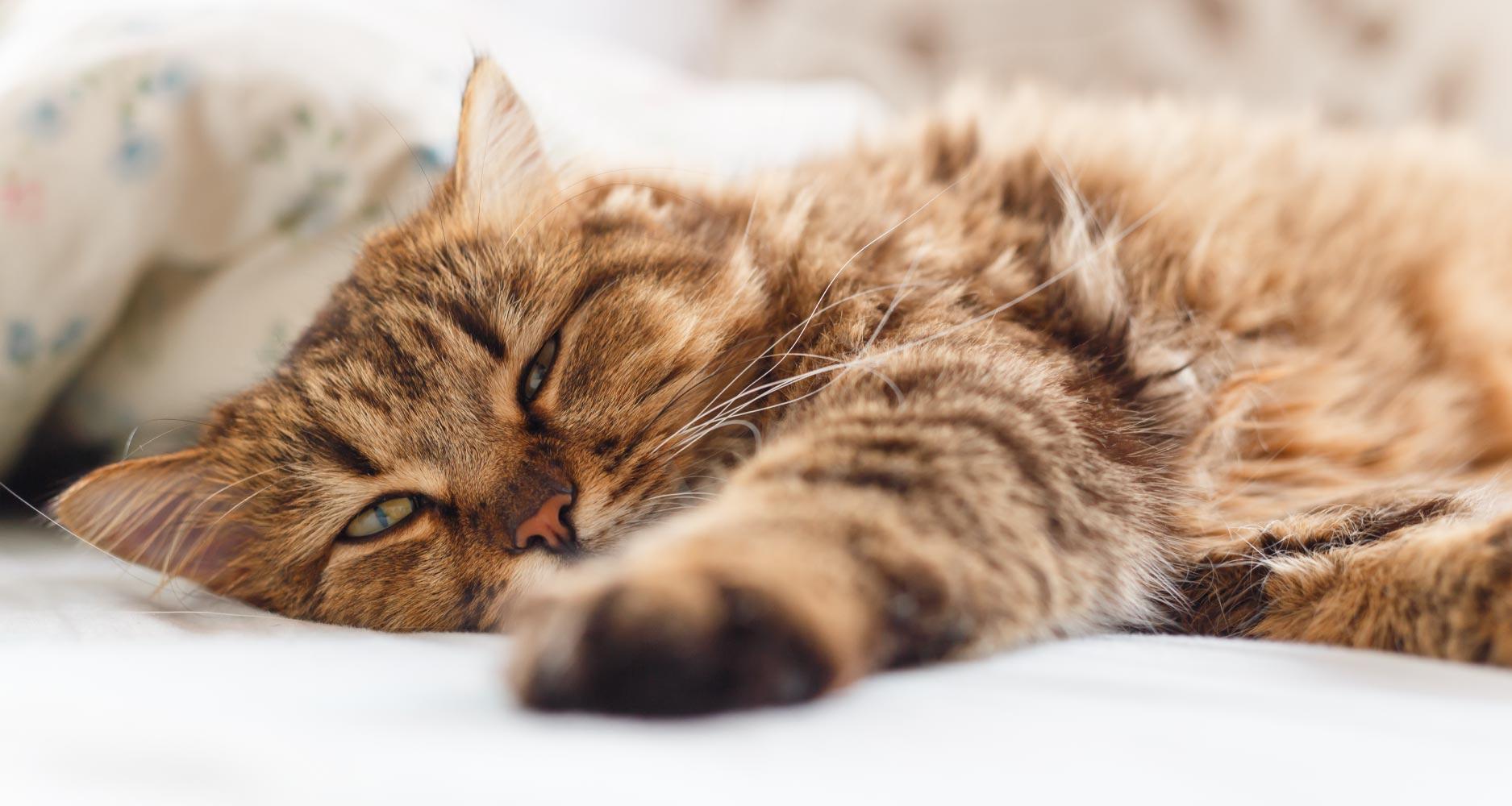 image of a sick cat