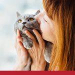 cats domestic canada