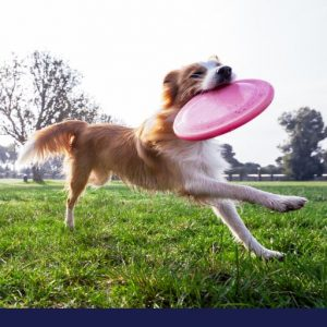 image of dog running the in park