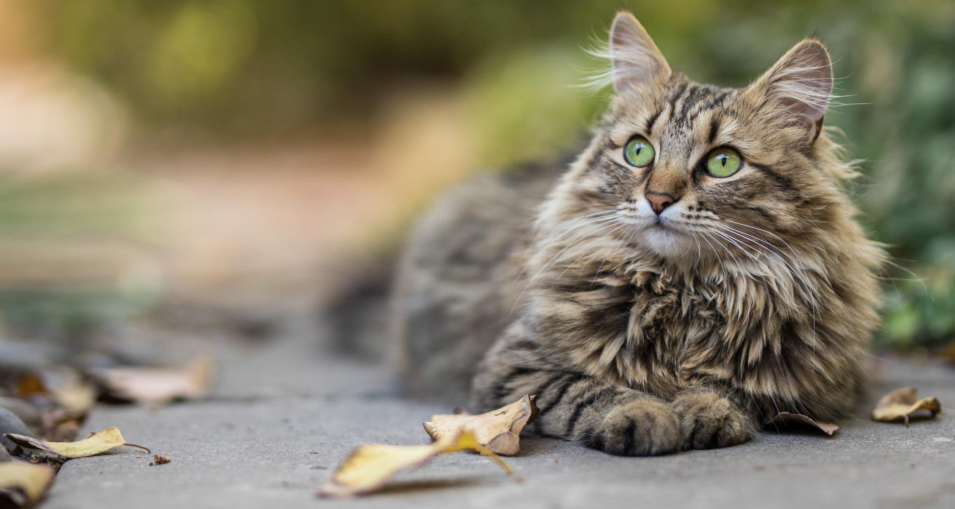Cat Coat And Skin