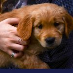 Anxiety and phobias in dogs