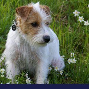Dog Pancreatic Cancer