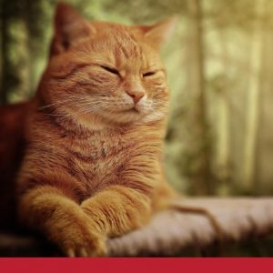 Cat Stomach Cancer