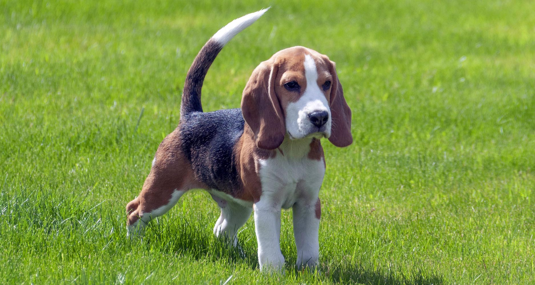 Dog Breed conditions