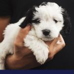Acid Reflux or Gerd in Dogs