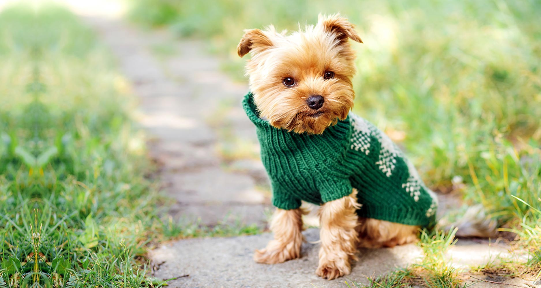 Should Dogs Have And Wear Clothes? - PetlifeCA