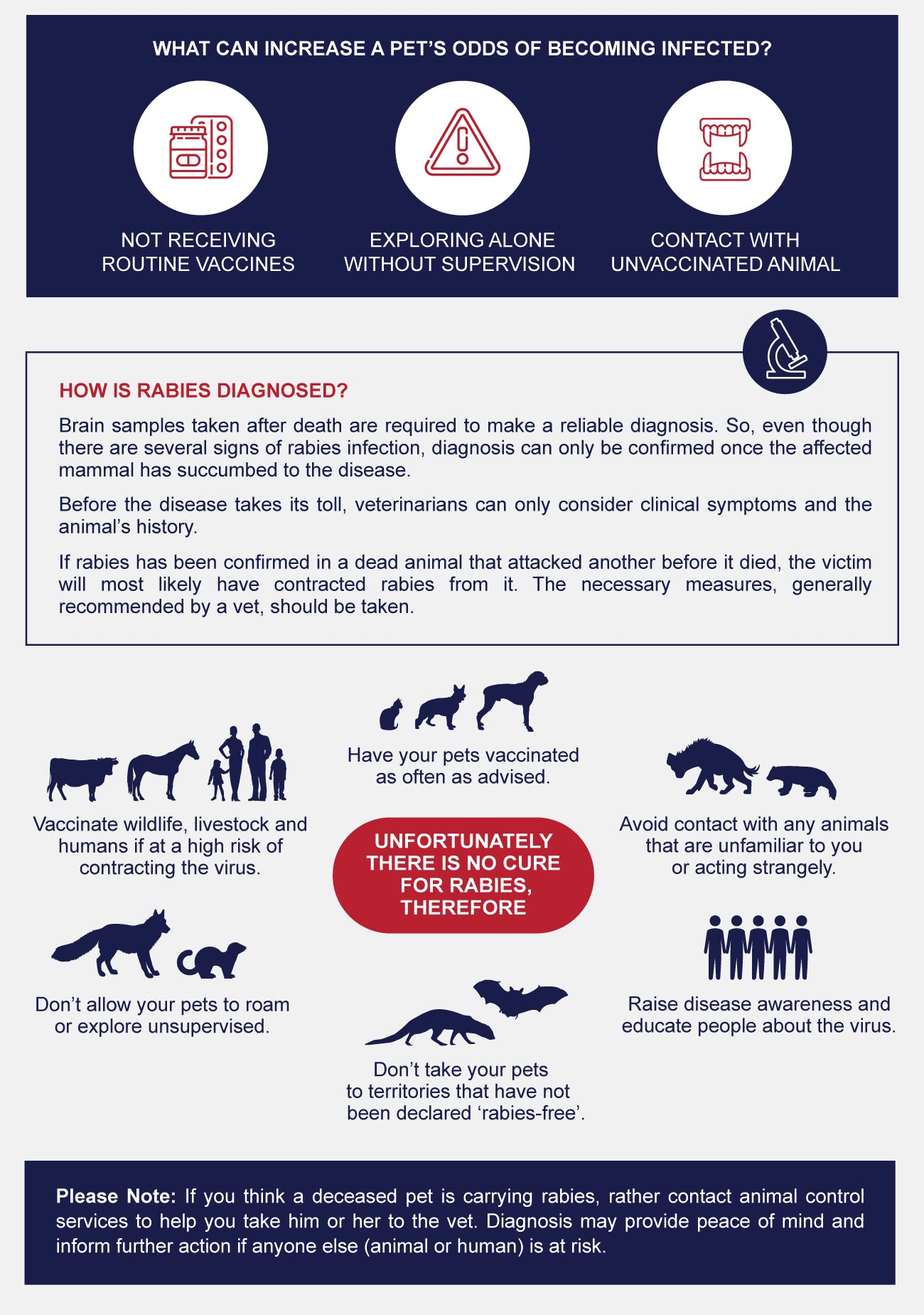 infographic of rabies diagnosis