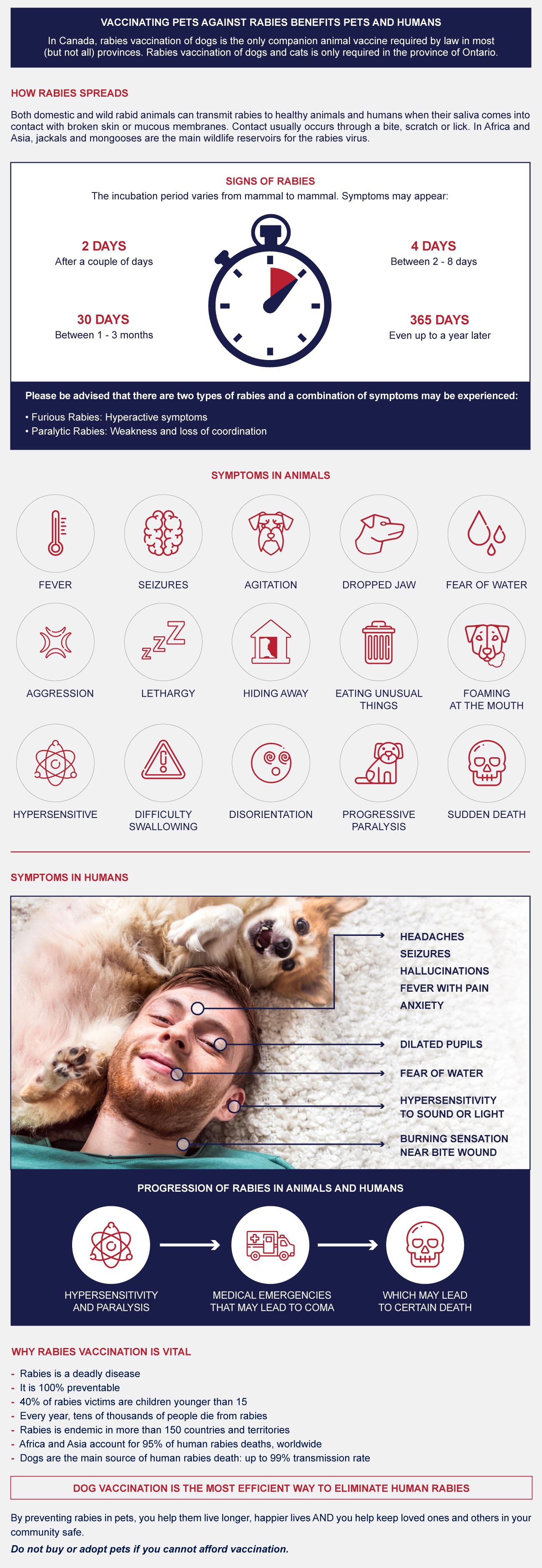infographic of how rabies spread