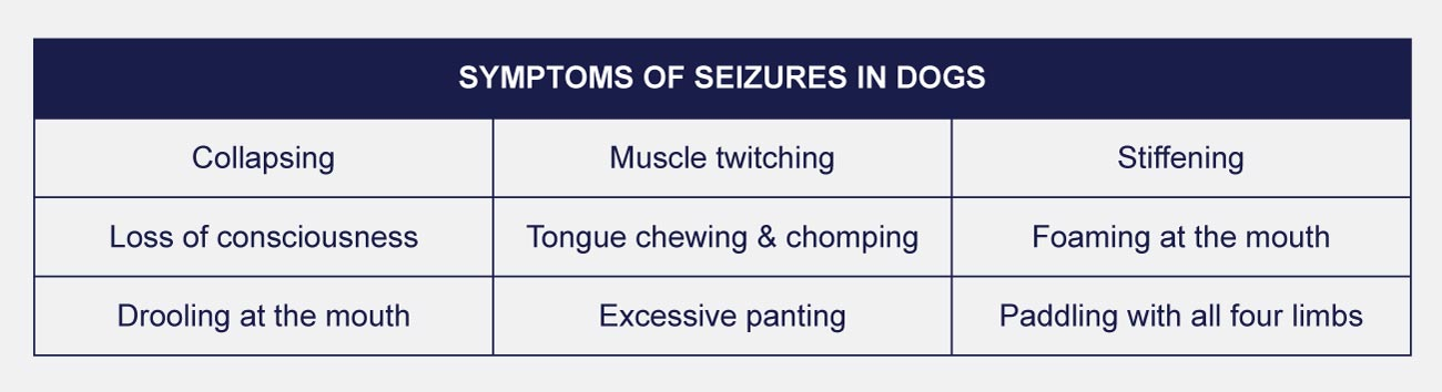 symptoms of seizures in dogs infographic