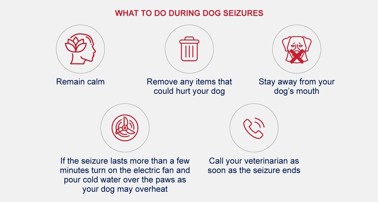what to do during dog seizures infographic