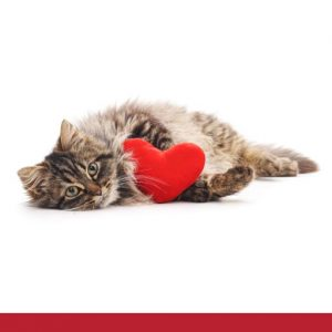 Cat holding a red heart shaped cushion