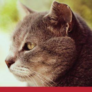 Grey cat close up side profile