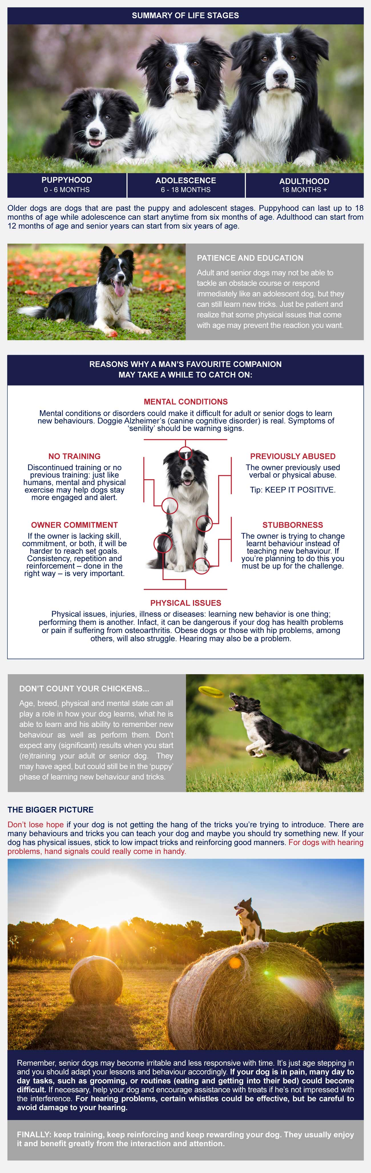 infographic training older dogs