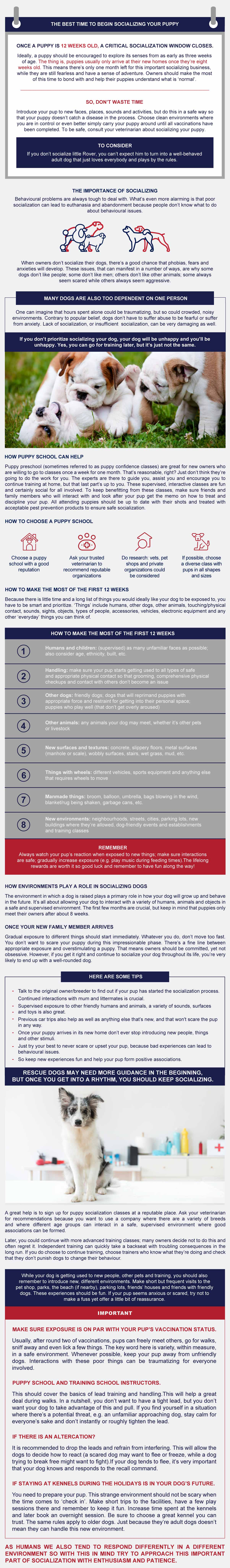 infographic importance of socializing puppies