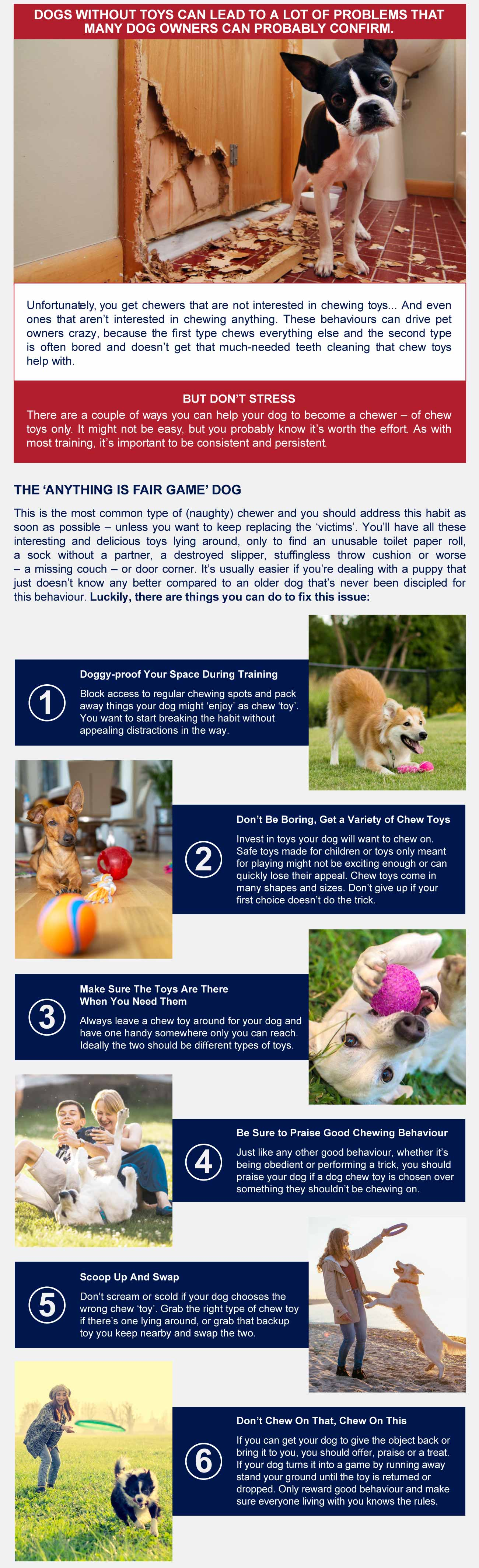 Infographic the benifits of dog toys
