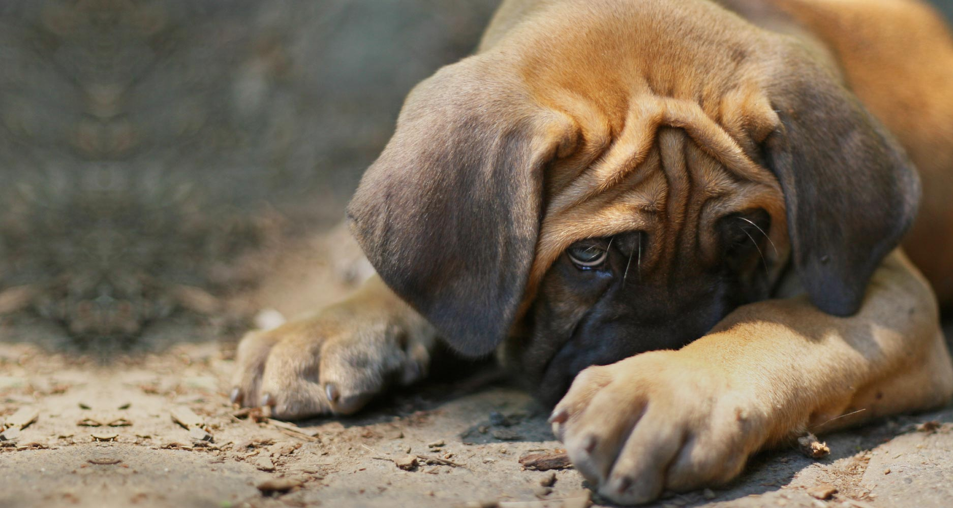 dog common phobias and fears