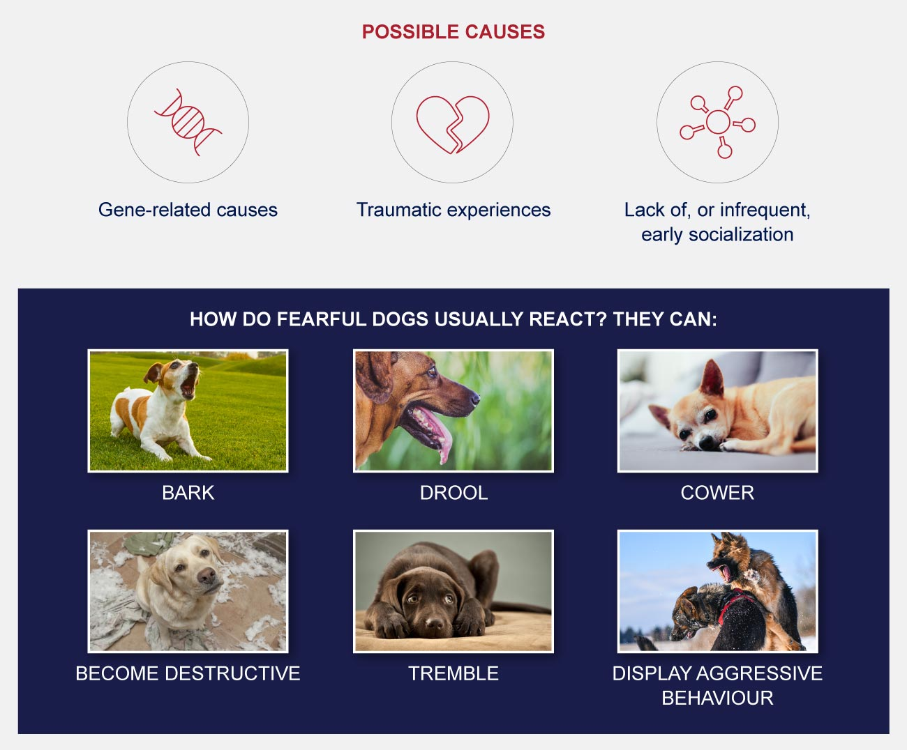 infographic dog phobias and fears