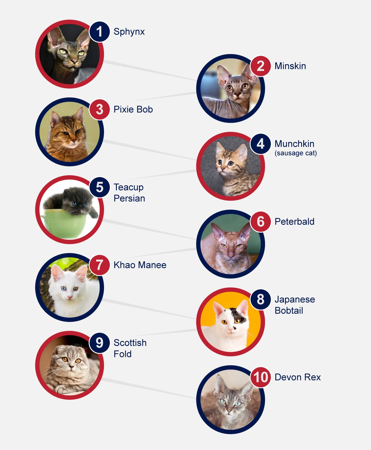 infographic cats unusual breeds