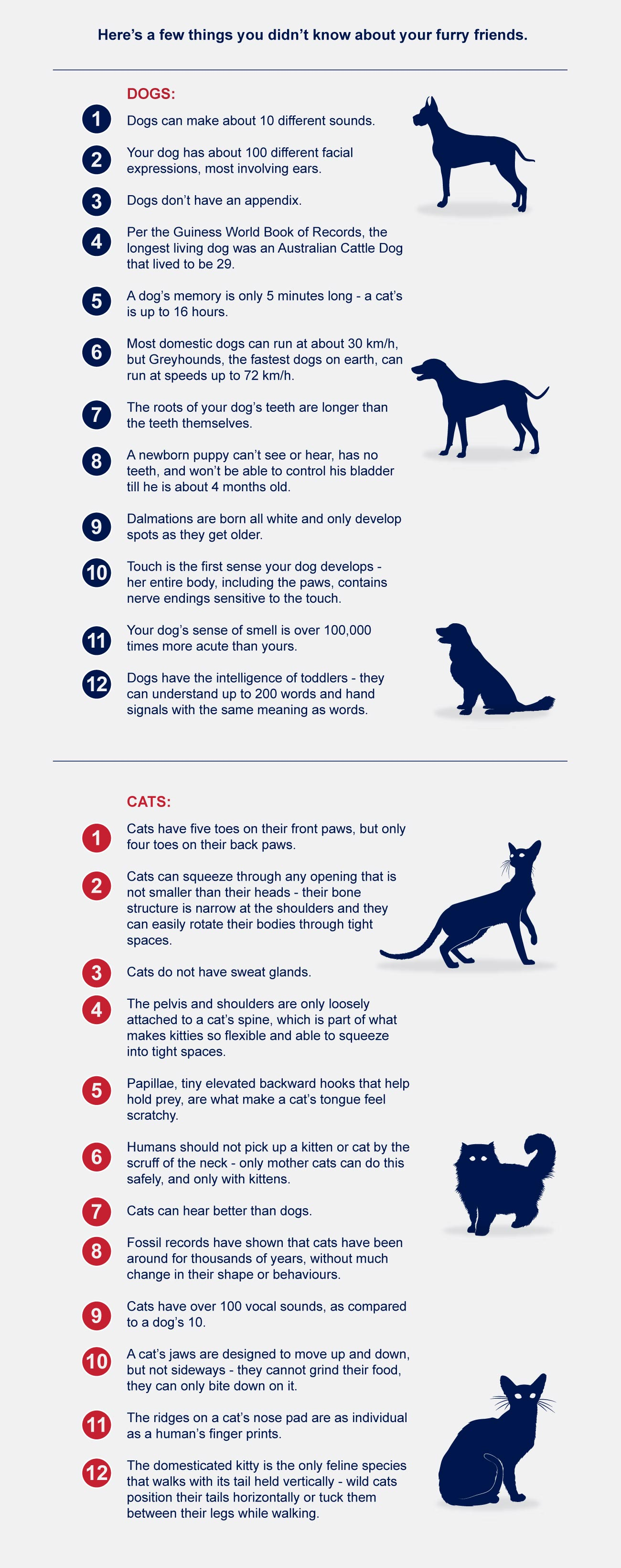 infographic uncommon facts dogs vs cats