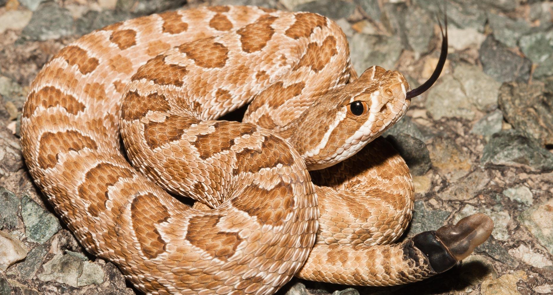 pet owner snake guide