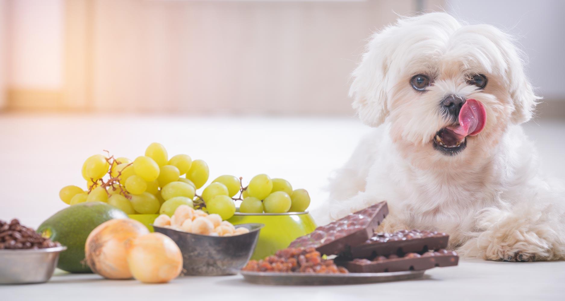 dog poison dangers
