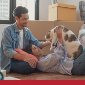cat moving house checklist