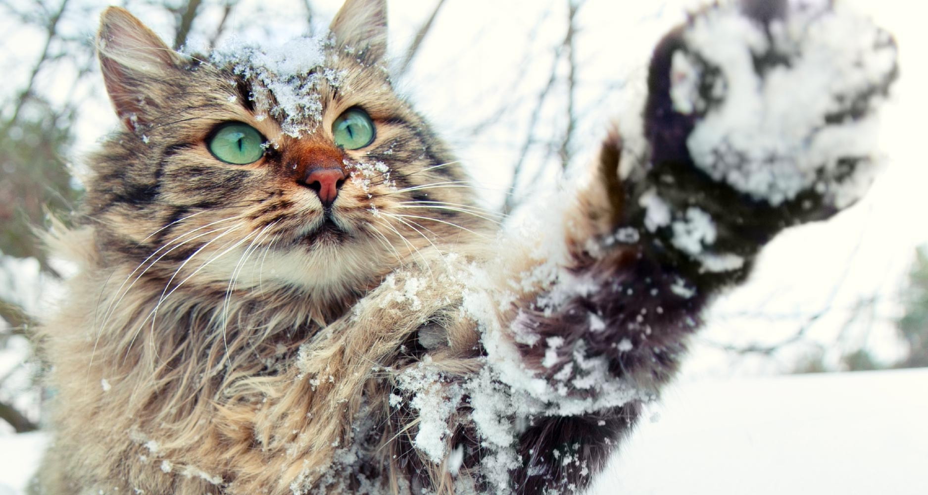 cats cold outside