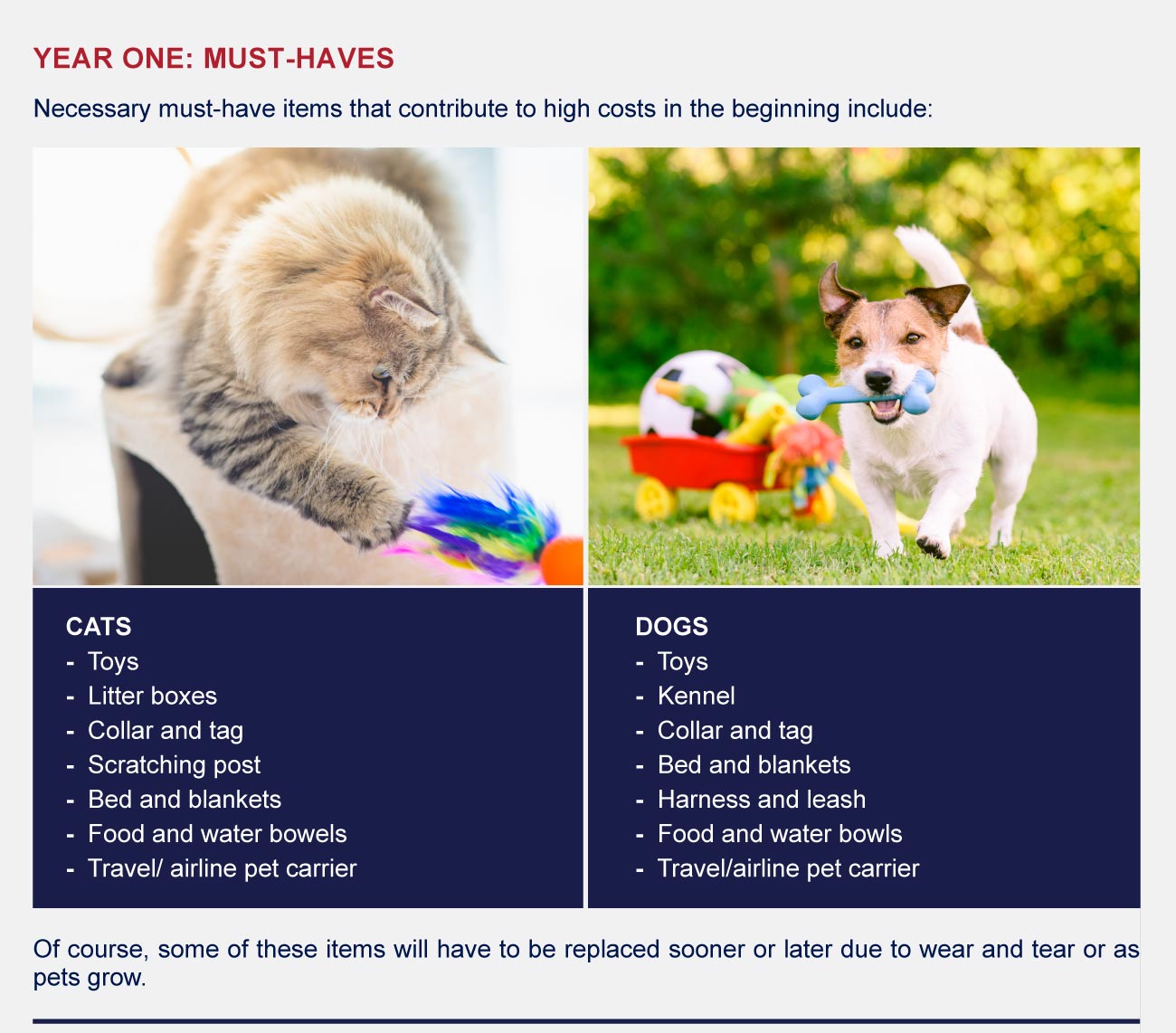 Year one: must haves for cats and dogs