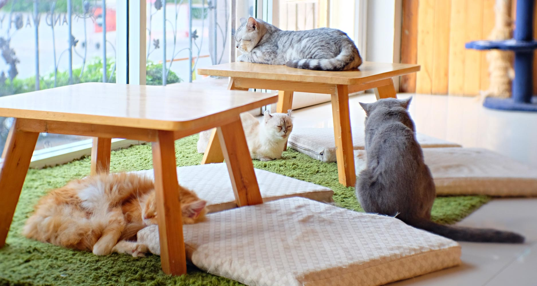 image of cats at daycare