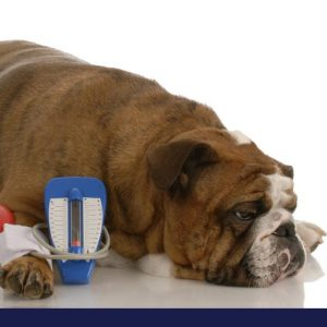 Dog lying on the floor having blood pressure checked