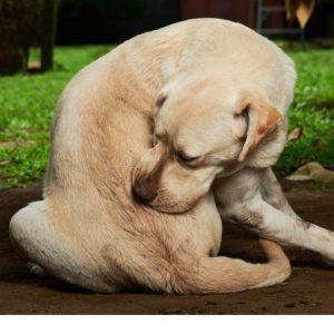 Dog scratching himself in garden