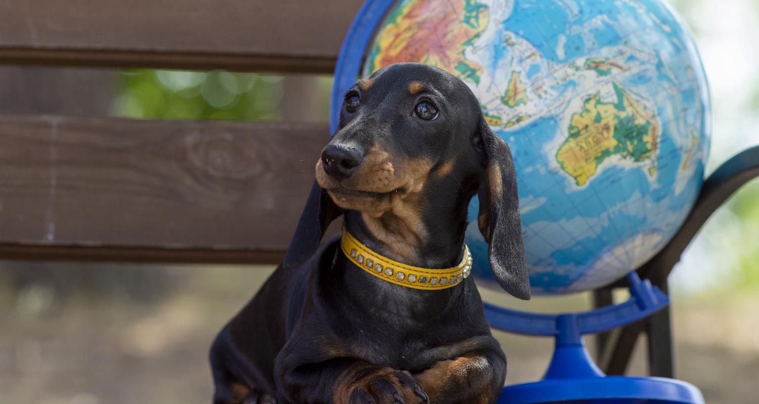 picture of dog sitting on bench with atlas globe behind him