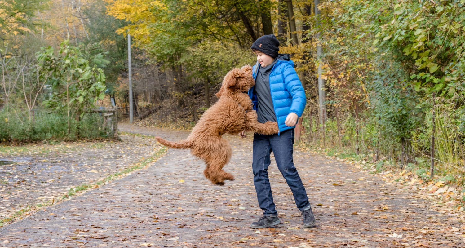 dogs that jump and how to stop them