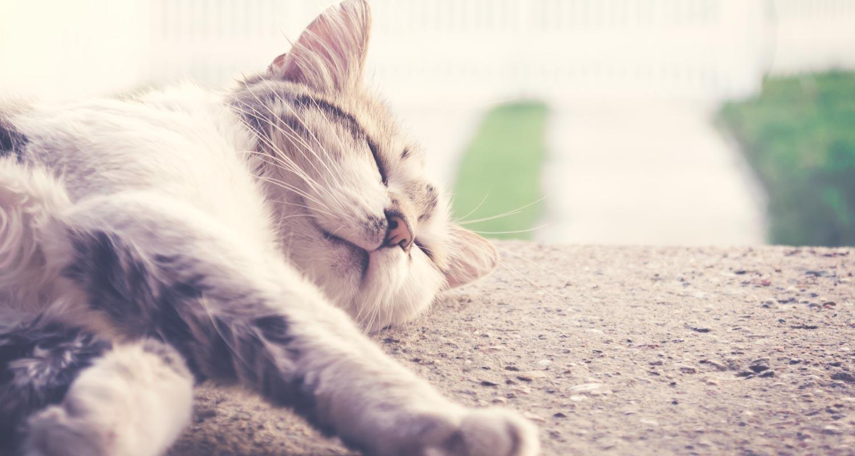 Cat lying down next to pool