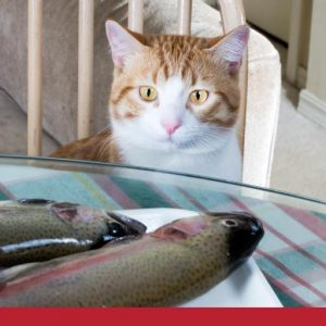 Cat looking at raw fish on a plate