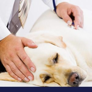 Sick looking dog being inspected by doctor