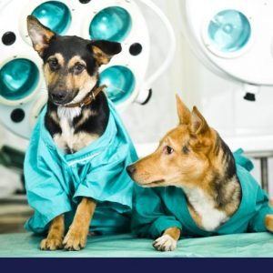 Two dogs sitting on bed before scan