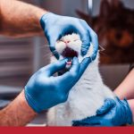 Cat receiving oral examination