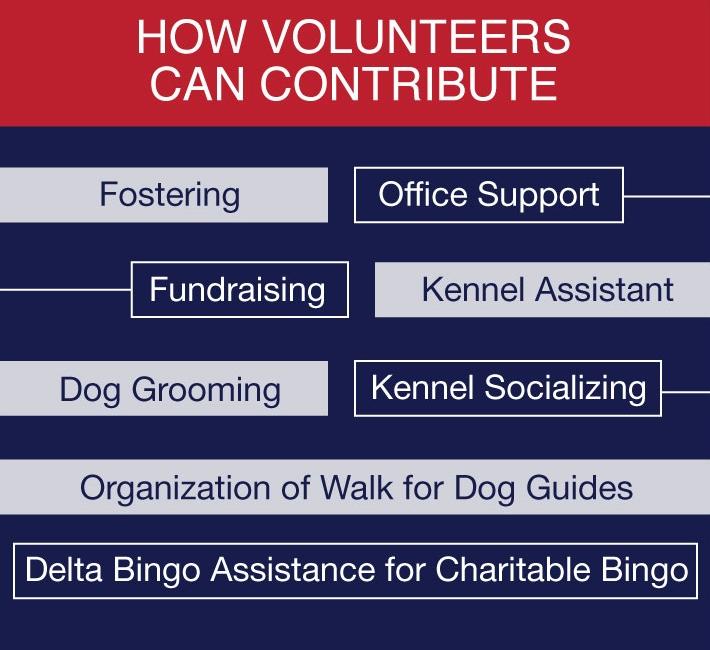 Animal Welfare how volunteers can tribute